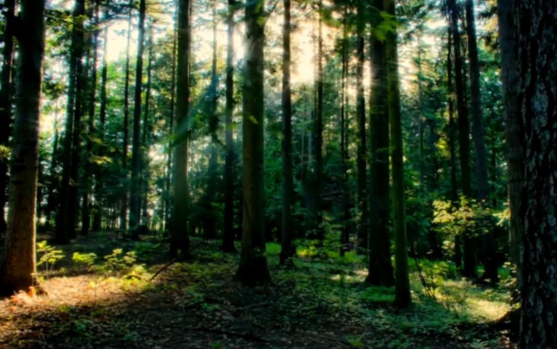 Leśne drzewostany
